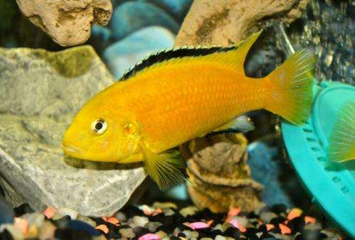 Smarter than you think: Fish can remember where they were fed 12 days later