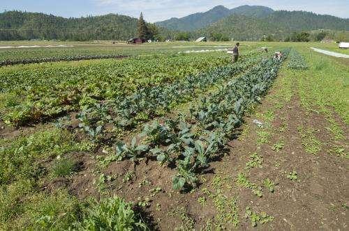 La calculadora basada en hojas de cálculo ayuda a los agricultores orgánicos a utilizar los fertilizantes de manera más eficiente