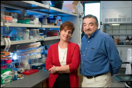 Stanford researchers create 'evolved' protein that may stop cancer from spreading