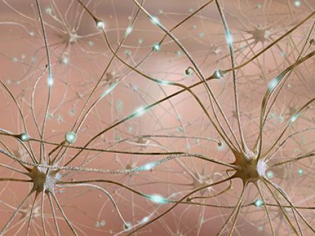 Stimulating brain cells stops binge drinking, animal study finds