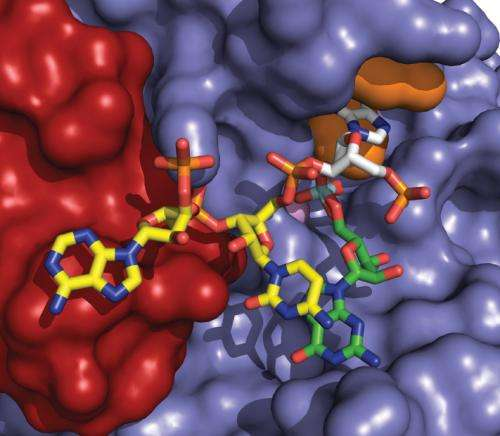 Structure of enzyme seen as target for ALS drugs