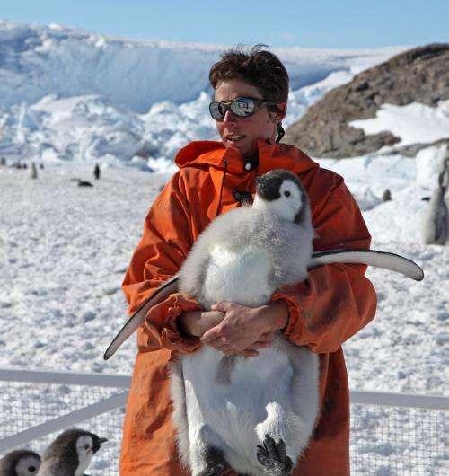 Study finds Emperor penguin in peril