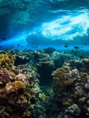 Study grapples with ocean climate stress challenge