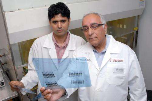 Study hints at antioxidant treatment for high blood pressure