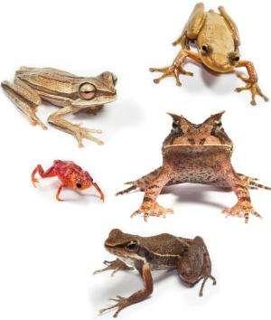Study proves biodiversity buffers disease