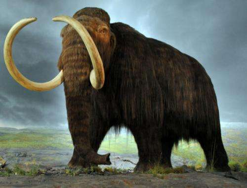 Study shows flowers powered the woolly mammoth