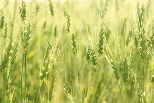 Study shows importance of European farmers adapting to climate change