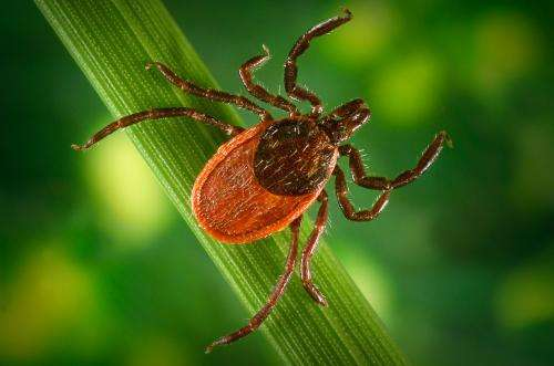 Ten things you always wanted to know about ticks