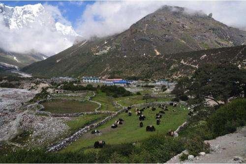 The genetic origins of high-altitude adaptations in Tibetans