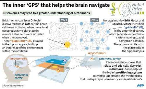 The inner 'GPS' the helps the brain navigate