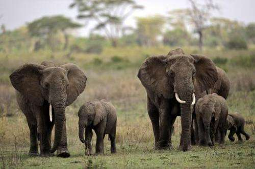 The two-day UN-backed conference which opened Friday aims to come up with strategies to stem worsening elephant poaching in Tanz