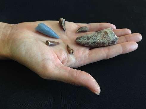 Tooth buried in bone shows two prehistoric predators tangled across land, sea boundaries