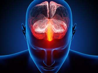 """""""Trigger"""" for stress processes discovered in the brain"""