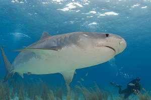Underwater sound and lights show considered to repel sharks