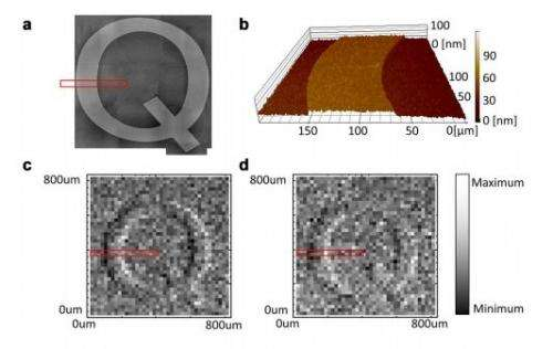 Researchers use quantum entanglement to improve differential interference contrast microscopy