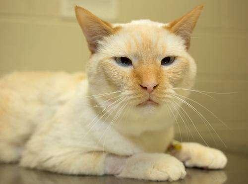 Veterinary surgeons use feline adult stem cells in kidney transplant