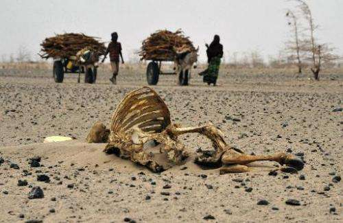 Wajir residents walks past carcasses of livestock, which died due to extreme prolonged drought, on July 20, 2011 in Athibohol, N