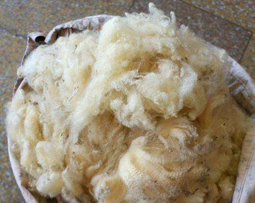 Wool quality reduced with weight loss: proteomic study