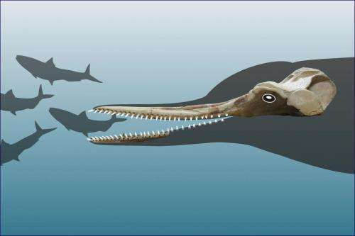 New species of extinct dolphin sheds light on river dolphin history