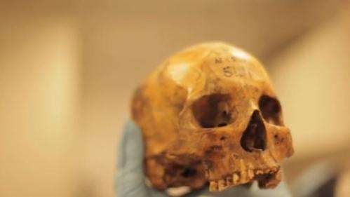 Ancient bone fragments help describe diet, health of Saharan ancestors