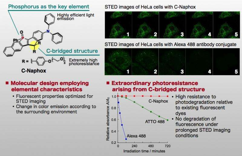 A new molecular tool for continuous super-resolution fluorescence microscopy