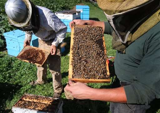 Appeals court blocks pesticide use over concerns about bees