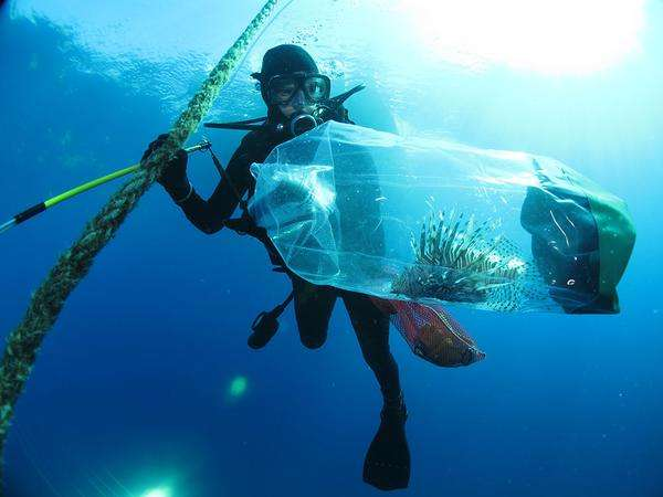 Aquatic Nuisance Species Task Force releases National Invasive Lionfish Management Plan