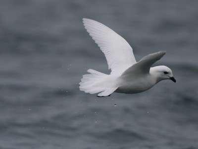 Assessing seabird communities