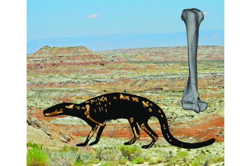 A well-preserved skeleton reveals the ecology and evolution of early carnivorous mammals