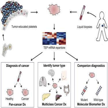Blood sample new way of detecting cancer