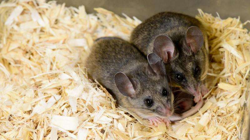 BPA can adversely affect parenting behavior in mice