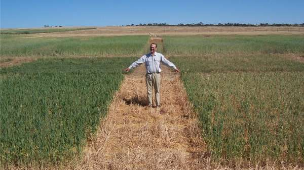 Break crops combat ryegrass headache