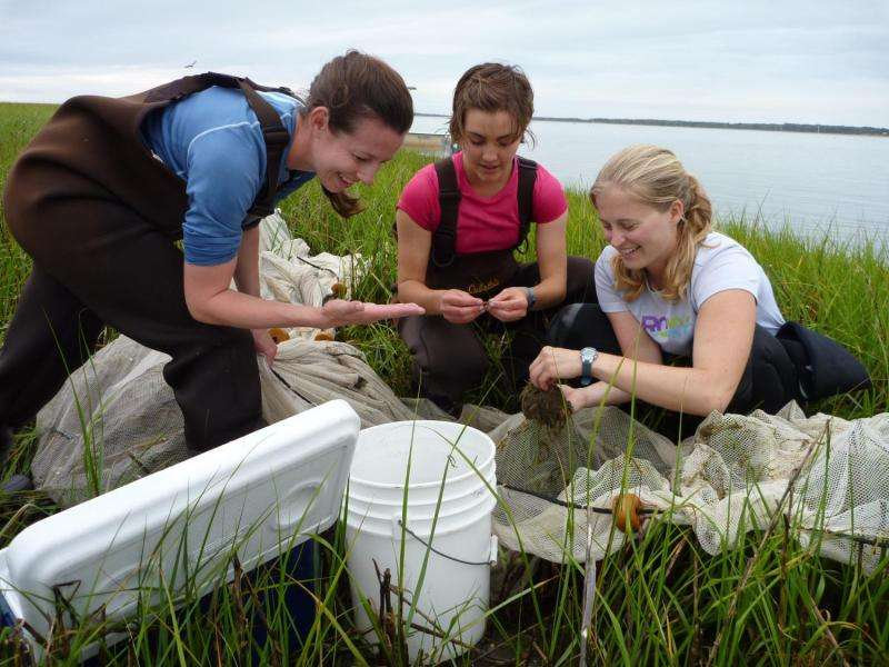 Bugs and slugs ideal houseguests for seagrass health