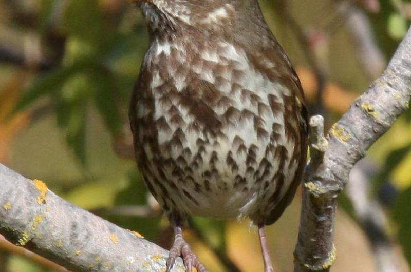 Cold rush: Bird diversity higher in winter than summer in Central Valley