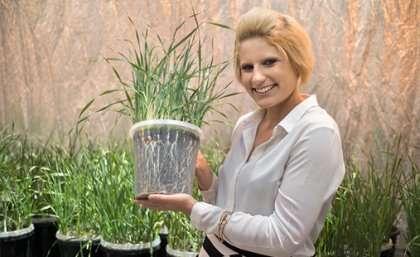Digging deep to drought–proof Australian barley