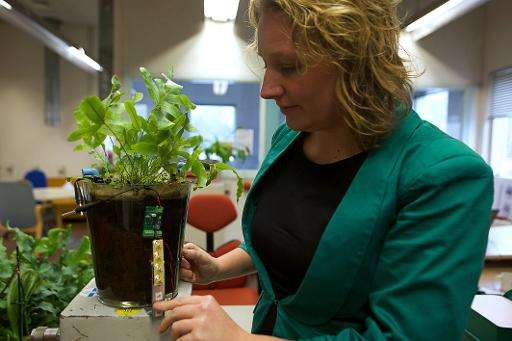 Dutch scientist Marjolein Helder, co-founder of Plant-e, which makes products that harvest energy from living plants, demonstrat