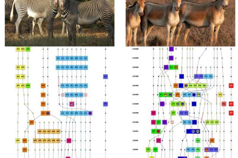 Dynamic social-network analysis reveals animal social behaviors