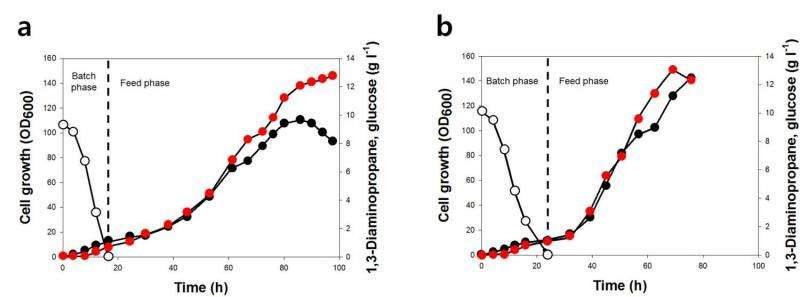Engineered bacterium produces 1,3-diaminopropane, an important industrial chemical