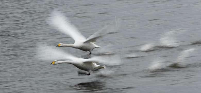 Engineers find secret to steady drone cameras in swan necks