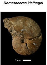 Free app empowers public to locate, recognize ancient fossils
