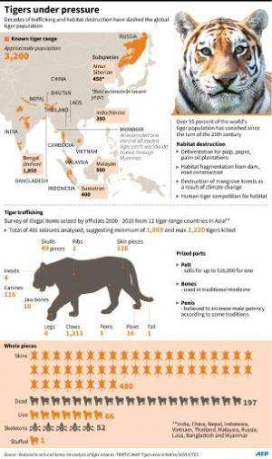 Graphic on the world tiger population. An anti-poaching summit opened in Kathmandu on Monday