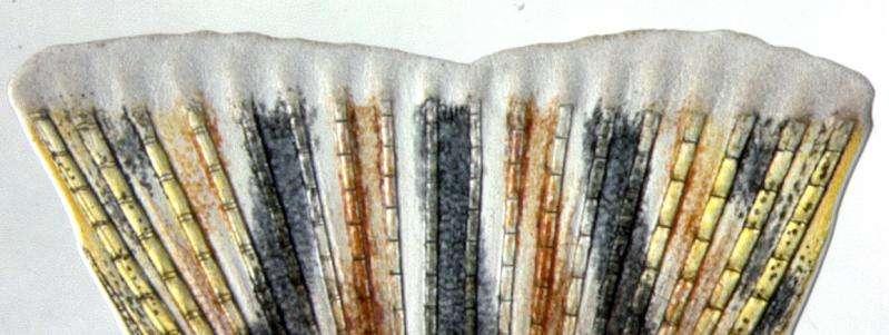 How zebrafish rebuild the skeleton of amputated fins