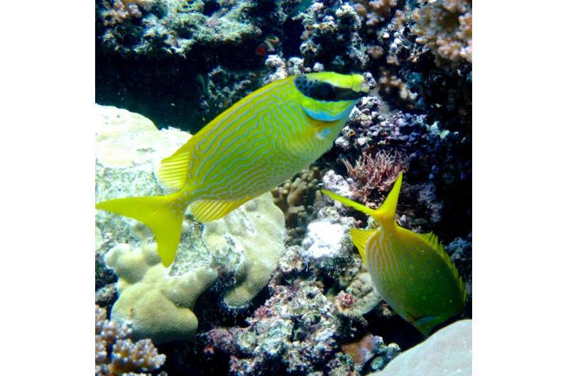 I've got your back -- fishes really do look after their mates!