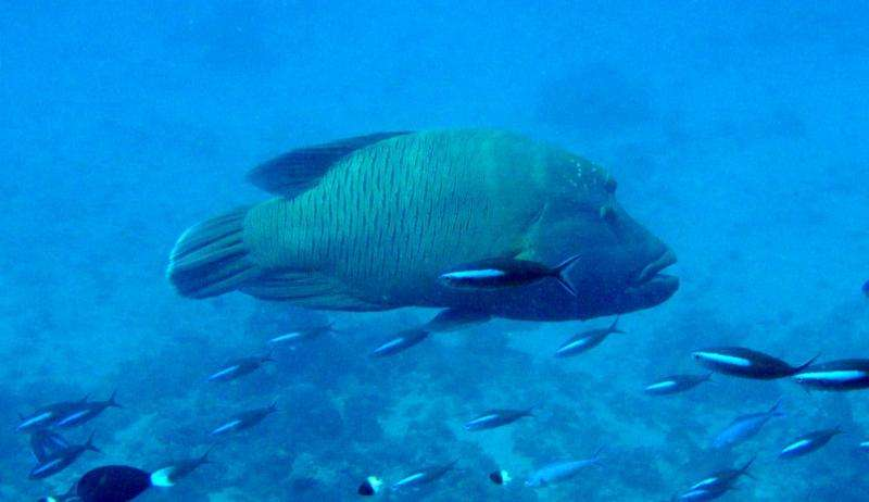Large permanent reserves required for effective conservation of old fish
