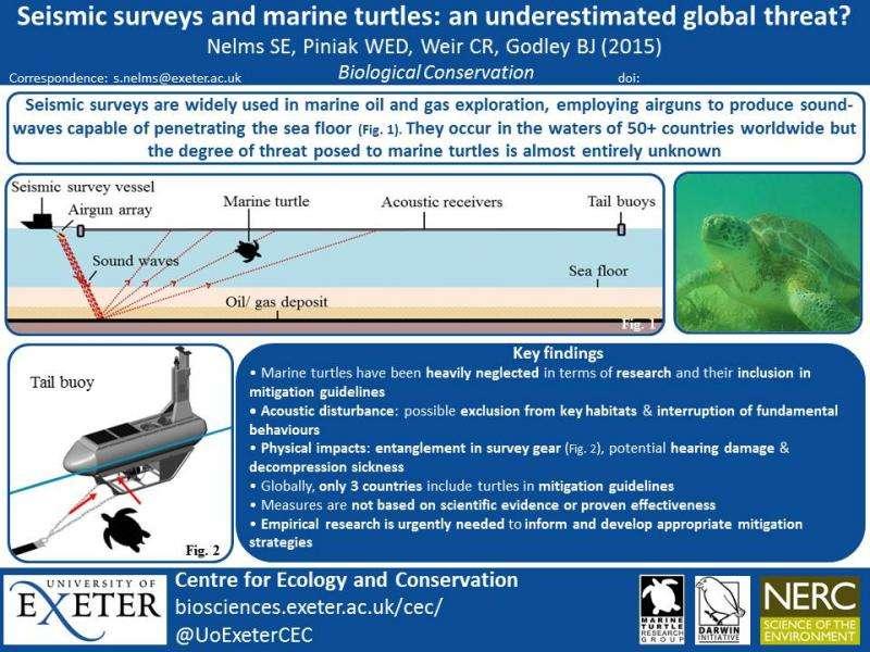 Marine airgun noise could cause turtle trauma