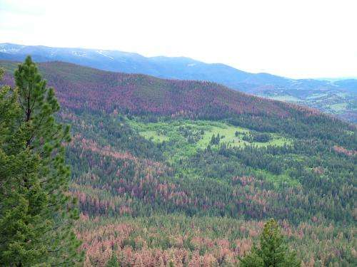 Mild winters not fueling all pine beetle outbreaks in western United States