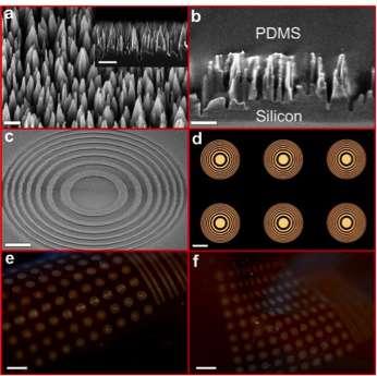 Minuscule, flexible compound lenses visualize vast fields of view