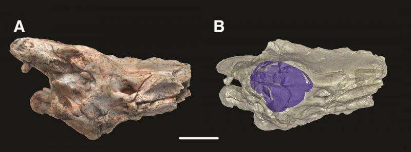 Mystery of how snakes lost their legs solved by reptile fossil