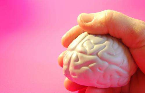 New findings on 'key players' in brain inflammation