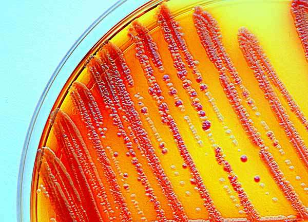 New method allows scientists to screen natural products for antibiotics